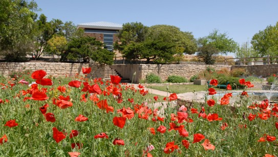 Sunken Garden in Georgetown, Texas